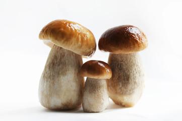 Три белых гриба. Семейка, портрет.