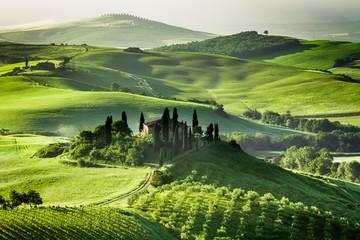 Farma gajów oliwnych i winnic