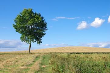 Krajobraz wiejski topola na tle nieba pola uprawne