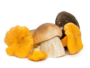 beautiful eadible mushrooms