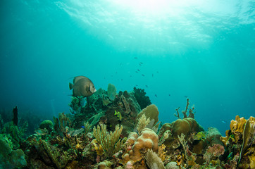 views from the coral reefs at the caribbean sea