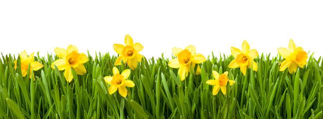 Wielkanocna łąka przed białym tłem