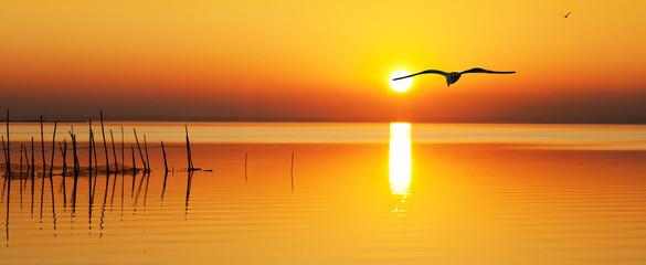 en busca del sol naciente