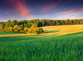 Colorful summer landscape with field of wheat
