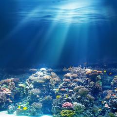 Morska lub oceaniczna podwodna rafa koralowa