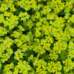 green flowers tileable background