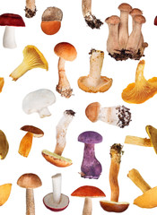 background from edible mushrooms on white