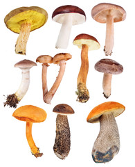 set of ten edible mushrooms isolated on white