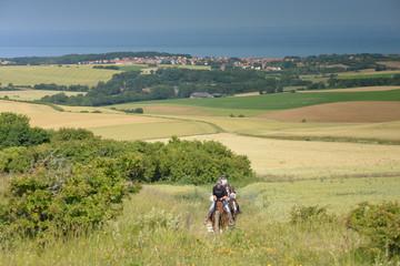 chevaux à Wissant