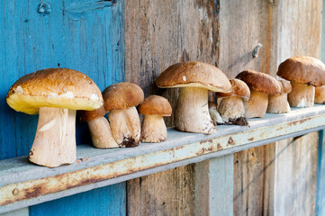 Mushrooms cepes on a wooden shelf
