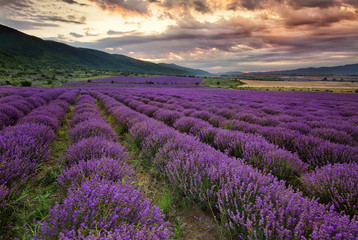 Stunning landscape with lavender field at dawn