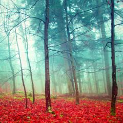 Kolorowe tajemnicze jesienne drzewa