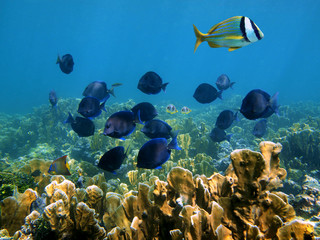 Tropical fish and coral reef in Panama