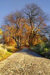 Krajobraz wiejski, brukowana droga w jesiennych kolorach