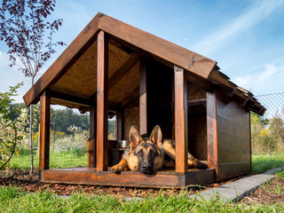 German shepherd in its kennel