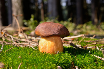 mushroom on moss in forest