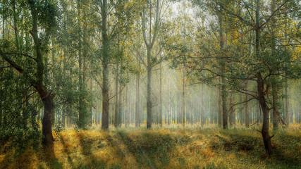 Promienie słońca wśród drzew