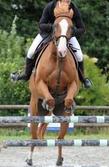 cheval saut d'obstacles