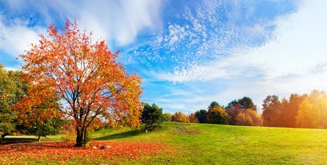 Jesień, jesień krajobraz. Drzewo z kolorowymi liśćmi. Panorama