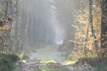 Leśna dróżka prowadząca przez zimowy las
