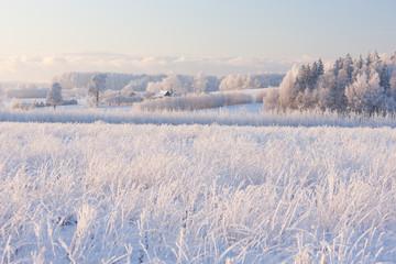 Wiejski zima krajobraz z białym mrozem na polu i lesie