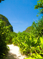Paradise Scene Hiking Path