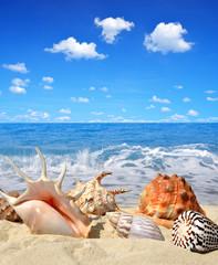 Sea shells on beach
