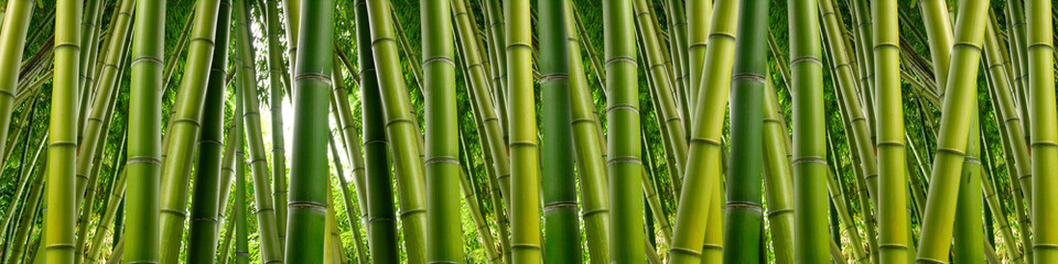 Dense Bamboo Jungle