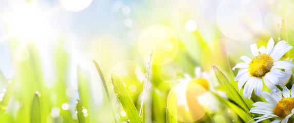 sztuka streszczenie słoneczny wiosna kwiat tło