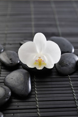 white orchid flowers and black stones on mat