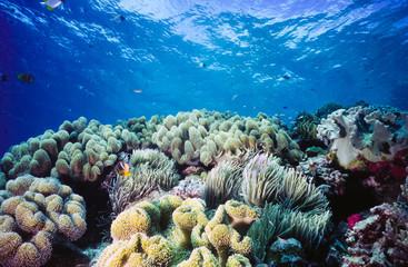Shallow Coral reef Palau Micronesia