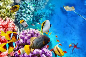 Podwodny świat z koralowcami i tropikalnymi rybami.