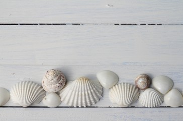 Pretty Shells all in a Row