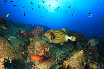 Coral reef and tropical fish in ocean