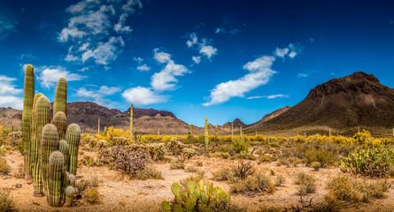 Krajobraz pustyni w Arizonie