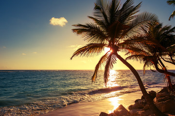 Palm tree on the tropical beach