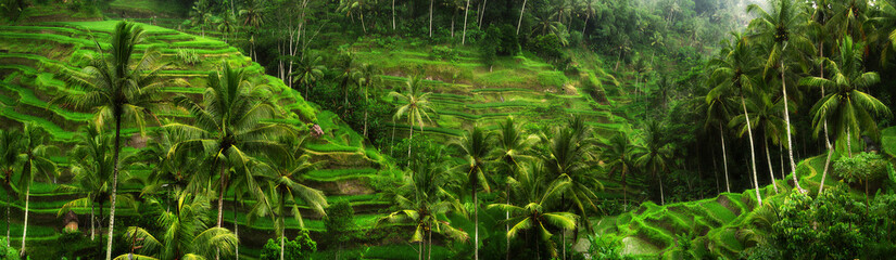 Rice fields near Ubud in Bali