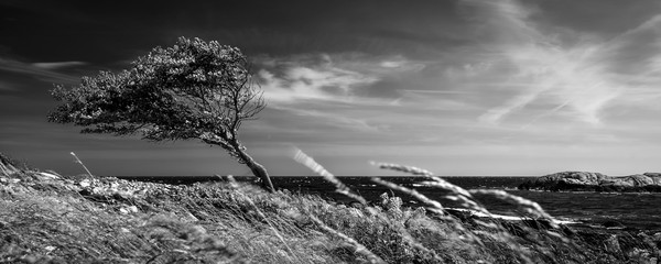Lonely tree in black and white