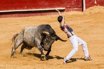 Competición de recortes con toros bravos