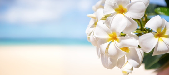 White tropical flower over beautiful beach