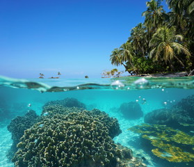 Over under sea tropical shore and coral underwater