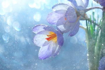 tender spring flowers wild