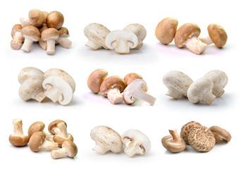champignon mushroom  and Shiitake mushroom isolated on white ba