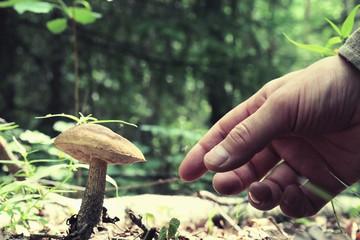 collect mushrooms macro