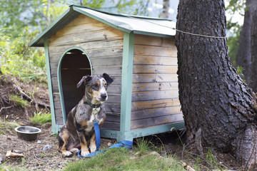 dog in front of his doghouse