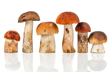 Orange-cap Boletus and porcini mushroom