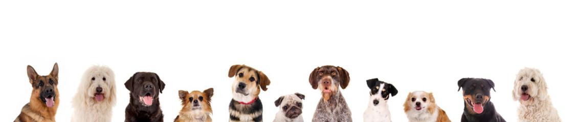 Reihe verschiedener Hundeköpfe