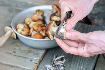 Cleaning process of edible forest mushrooms