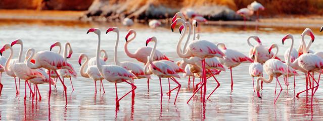 Flamingos near Bogoria Lake, Kenya