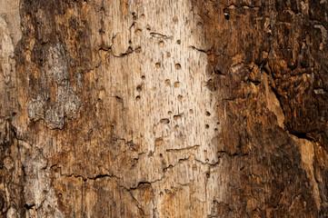 texture tree 4